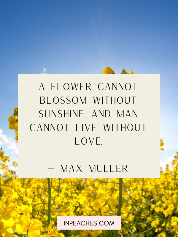 INSPIRING QUOTES ABOUT SUNSHINE