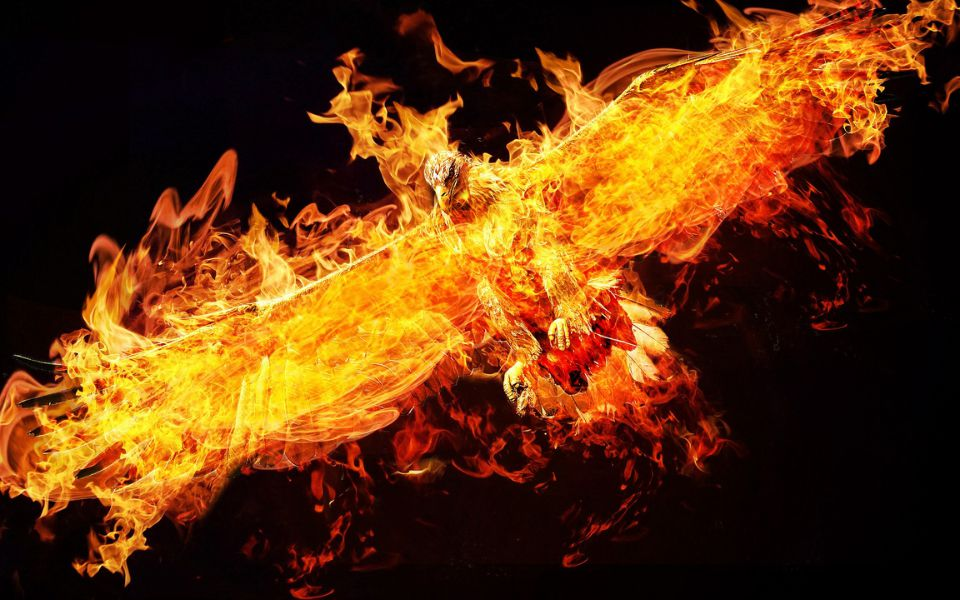 Phoenix quotes and sayings 2